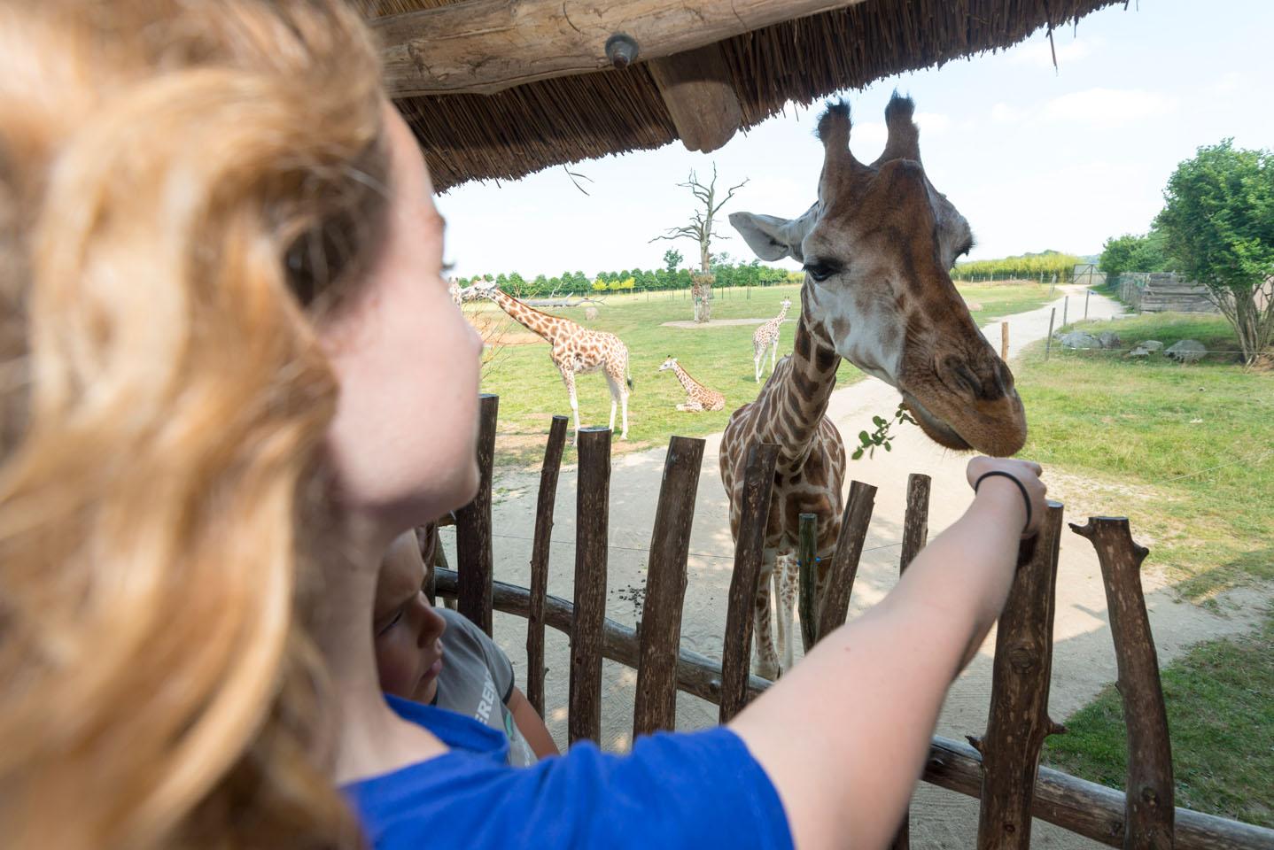 promotion du territoire, zoo de la boissiere du doré en loire-atlantique