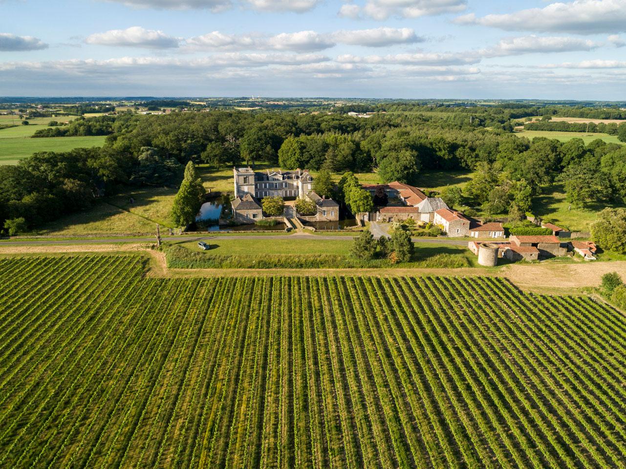 paysage de vigne et chateau, divatte sur loire, vue graphique, verdure